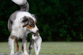 Aoûtats chez le chien et le chat... des…