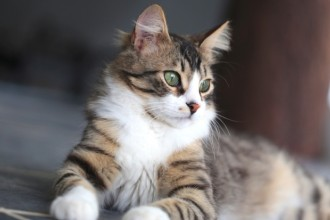 L'importance de vermifuger son chat