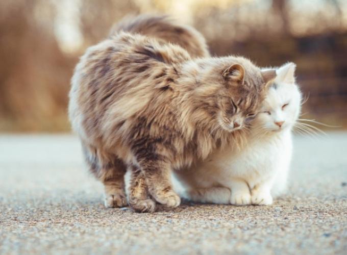 Un couple de Virginie s\u0027occupe d\u0027une quinzaine de chats sauvages
