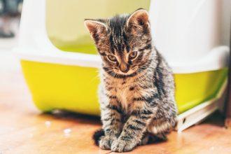Comment entretenir la litière de son chat