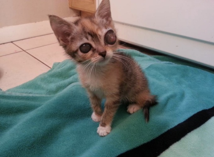 Petites photos gratuites de la chatte