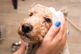 How to find the best grooming parlor for your dog