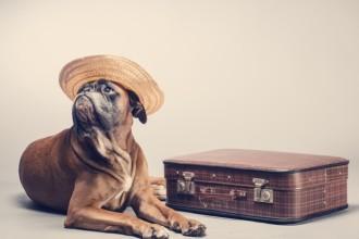 Comment choisir la bonne pension pour son chien