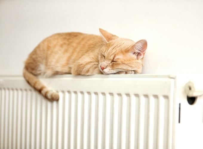 pourquoi mon chat dort dans des endroits bizarres. Black Bedroom Furniture Sets. Home Design Ideas