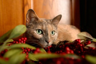 Christmas: 6 plants that are a danger…