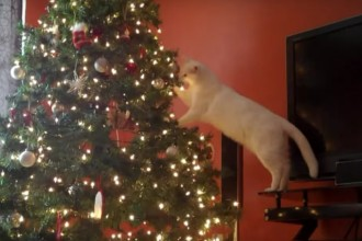 These cats hate Christmas