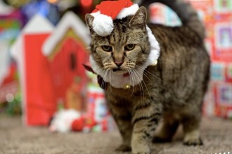 Nutmeg celebrates his 31st Christmas!