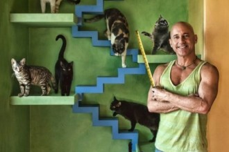 This man transformed his home into a cat paradise