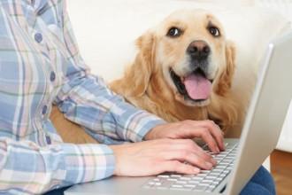 L'assurance santé animale prend en…