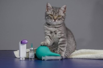 First aid kit for your cat