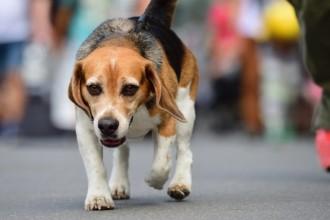 Comment bien vermifuger son chien ou son chat ?
