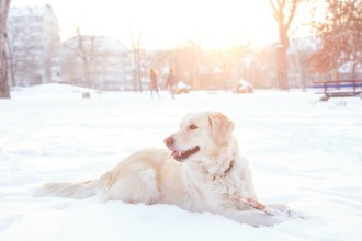 Voyager dans un pays froid avec son chien