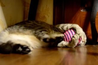 Vicious cat attacks defenceless ball
