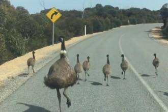 An aussie traffic jam