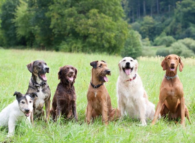 ballade chiens