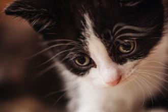 6 raisons de ne pas punir votre chat