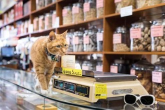 Cats in New York shops