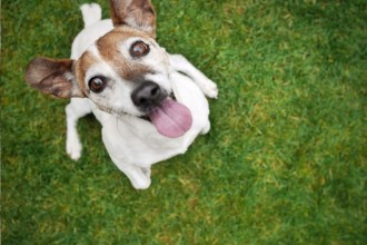 4 manières de calmer votre chien hyperactif