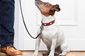 Tips on how to walk your dog on a leash