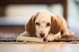 Tout savoir sur les os pour chien