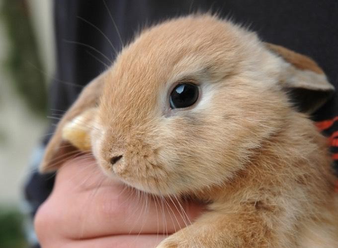 Le lapin un animal de compagnie part enti re yummypets for Avoir un lapin a la maison