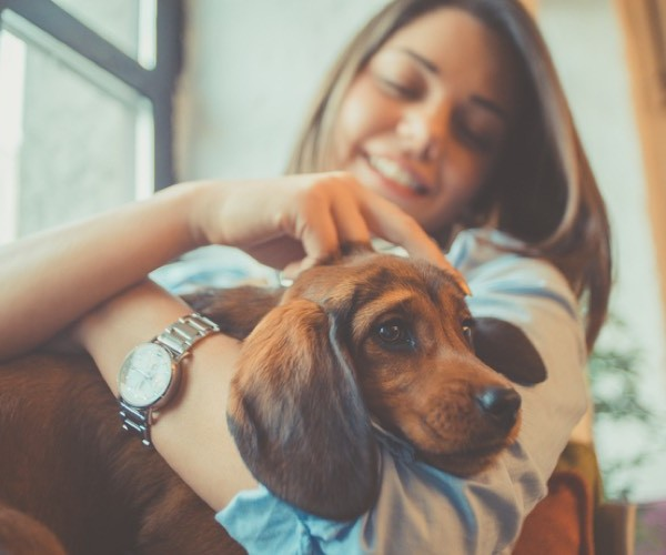 5 Reasons to massage your dog