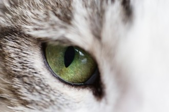 The eyesight of cats and dogs