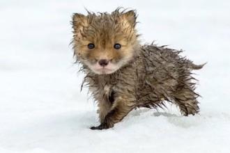 Top 25 cutest baby animals