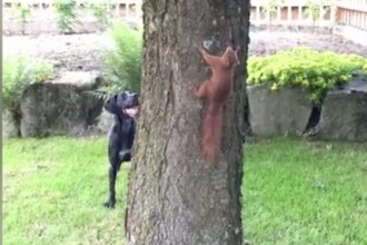A hilarious chase between a dog and squirrel!