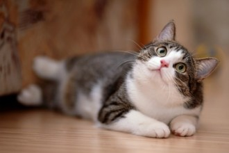 5 Things your cat would like to tell you
