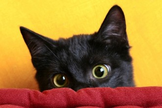10 good reasons to adopt a black cat