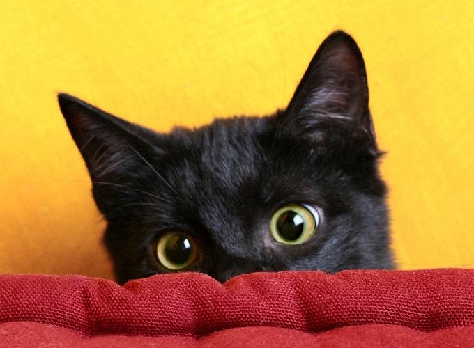 Célèbre 10 bonnes raisons d'adopter un chat noir - Yummypets RW11