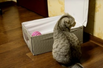 This cat has the funniest way of going into her box