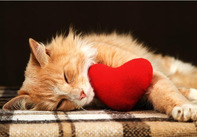 8 fa ons de f ter la saint valentin avec son animal yummypets. Black Bedroom Furniture Sets. Home Design Ideas