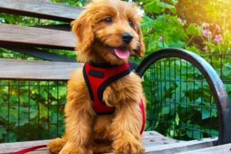 Comment choisir un harnais pour chien ?