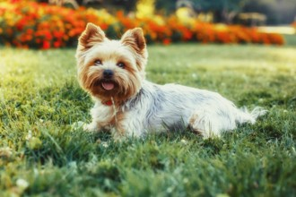 Top 10 small dog breeds