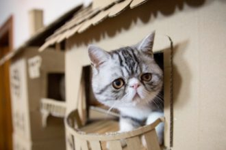 This woman made the ultimate cardboard castle for her cat