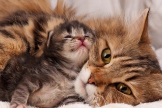 How to tell if your cat is pregnant