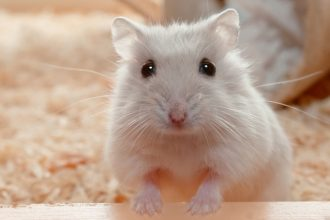 Advice for choosing a hamster to adopt