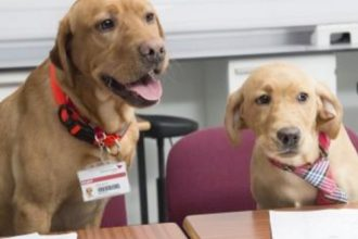 Vet student hopefuls had an interview... with two dogs!