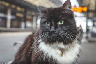 A world famous cat is raising money for charity
