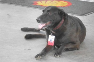Dog employed by petrol station he was…