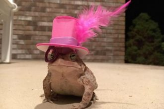 This guy made his neighbourhood toad…