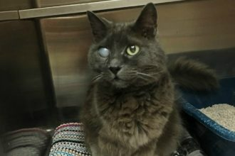 This one-eyed cat finally found a loving home