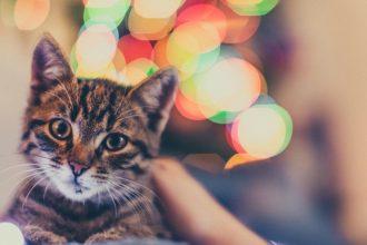 Noël, une période à risque pour votre chat !