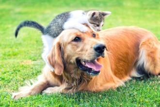 Qu'est-ce qu'un cancer chez le chat ou le chien ?
