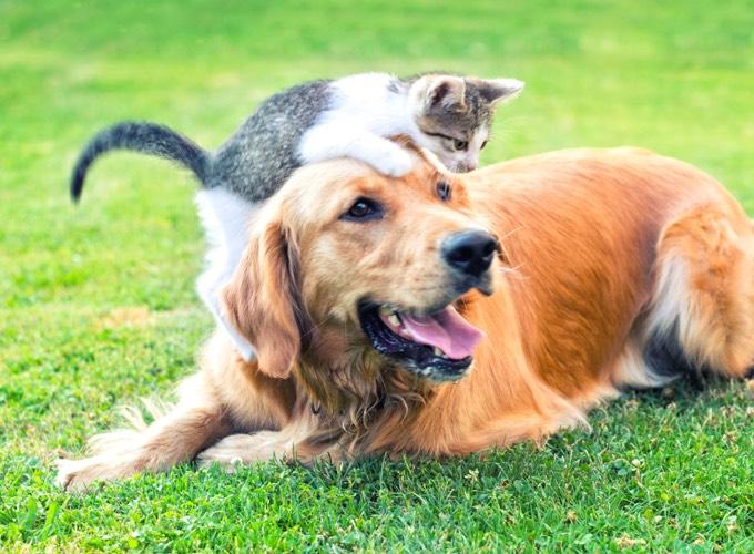 Qu 39 est ce qu 39 un cancer chez le chat ou le chien yummypets - Chat ou chien ...