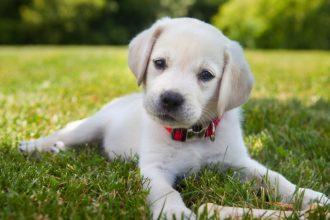 Pour ou contre la castration du chien mâle?