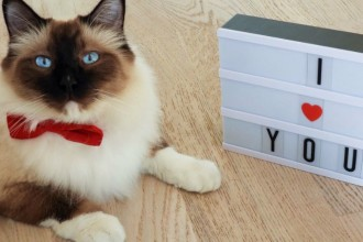 The winners of the 41st Yummypets Photo Competition!