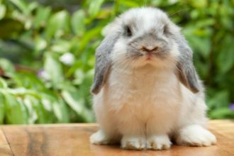 Common rabbit illnesses that you should know about